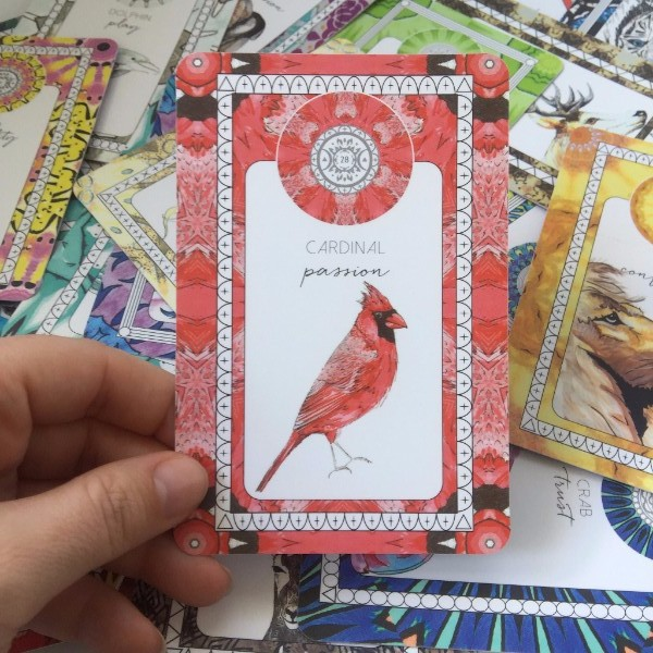 This was my first cardinal messenger - the animoon reading for the week email from Sarah Wilder at The Fifth Element Life. Click image to link to Sarah's site.